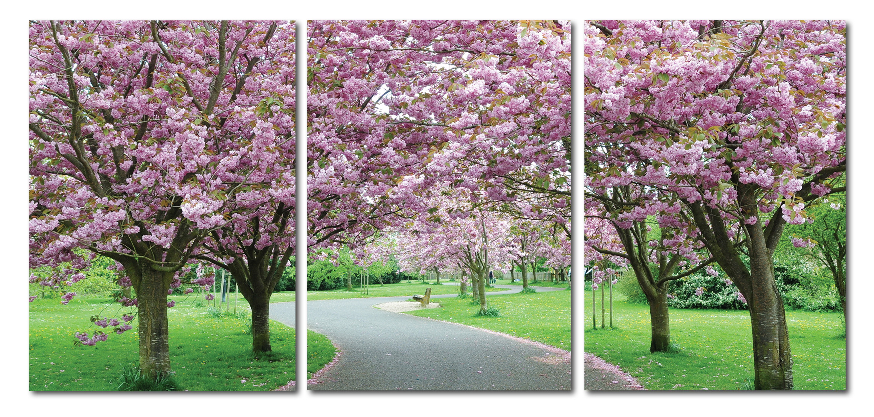 Baxton Studio Spring in Bloom Mounted Photography Print Triptych